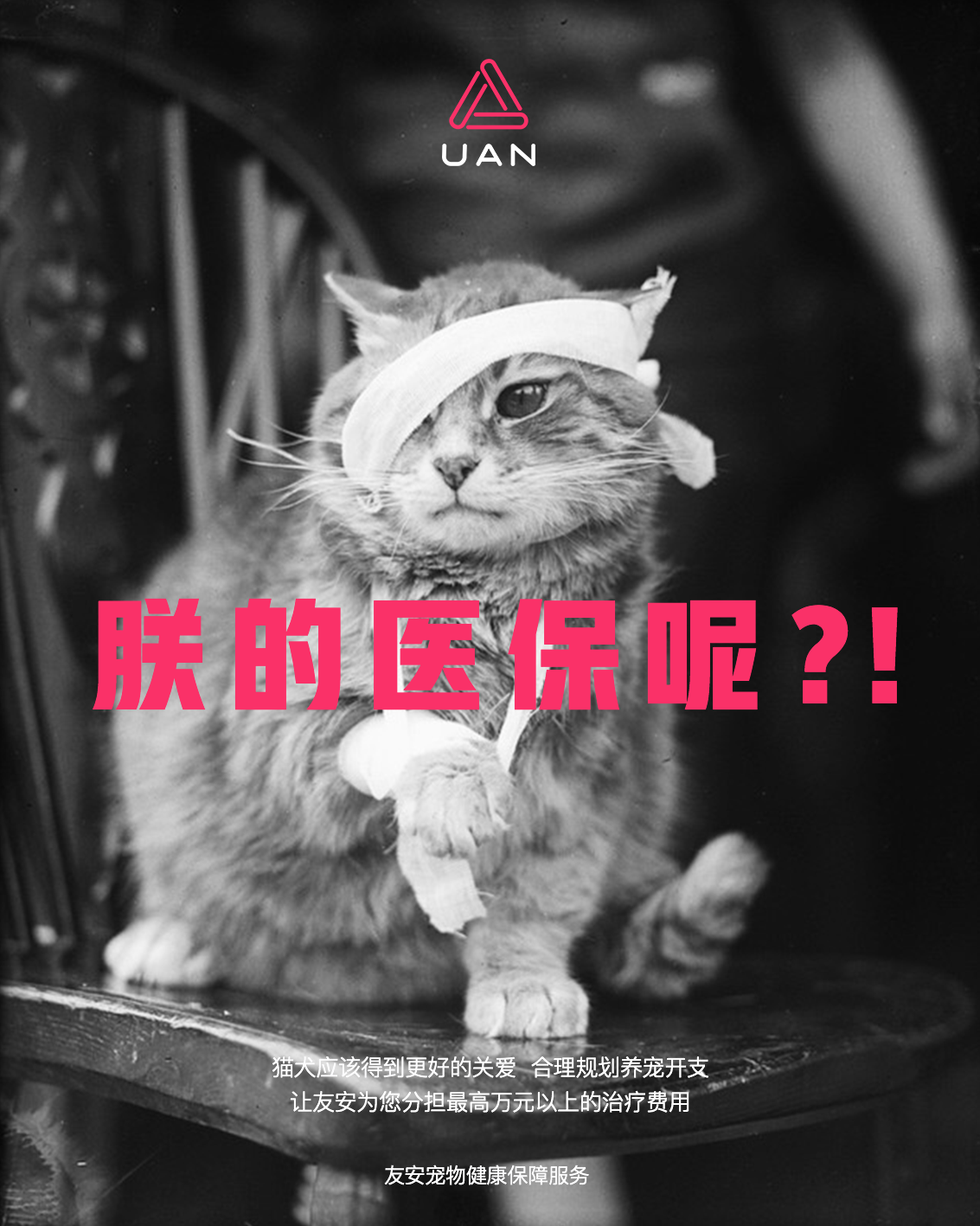 """互联网平台友安为减少宠物弃养推出""""爱你久久健康守护计划"""""""